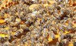 Бизнес пчелиный мед – Пасека как бизнес: разведение пчел, торговля медом